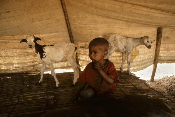 mali-child-with-goats_l