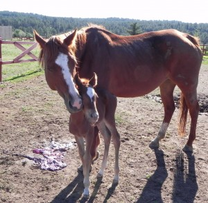 Patti and placenta (1)