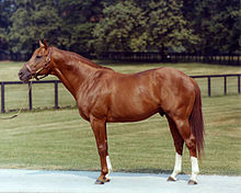 Secretariat_at_stud